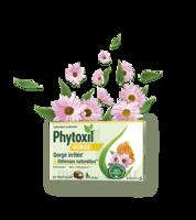 Phytoxil Gorge & Défenses Naturelles Pastilles B/20 à Saintes